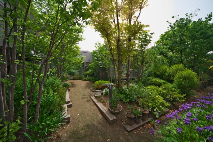 四季折々の表情を楽しめる緑豊かな庭