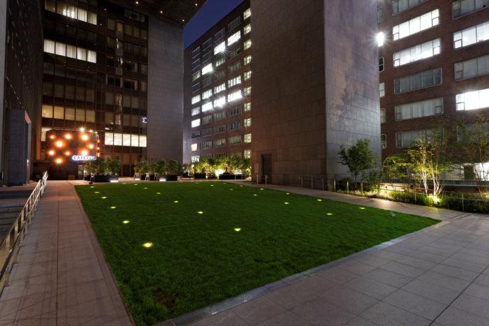 夜景 芝生広場